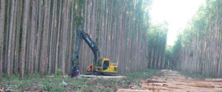 Máquina cortando eucaliptos