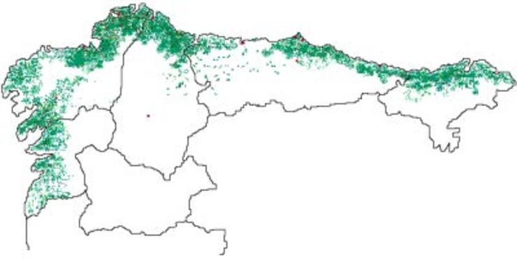 Plantacións de eucalipto no norte da Península