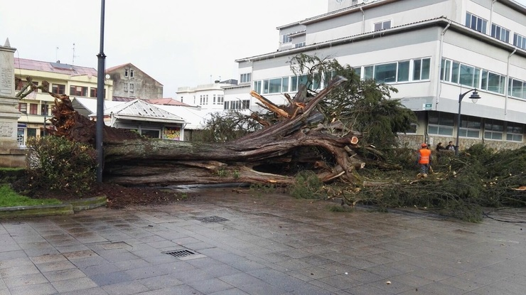 Arbol tirado en Carballo polo temporal / Europa Press