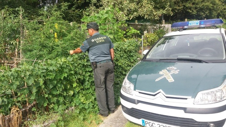 Investigado por cultivar marihuana en Gondomar. GUARDIA CIVIL  / Europa Press