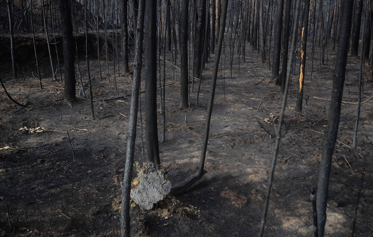 Bosque totalmente calcinado en Ribarteme (As Neves) en pleno outubro de 2017 / Miguel Núñez.