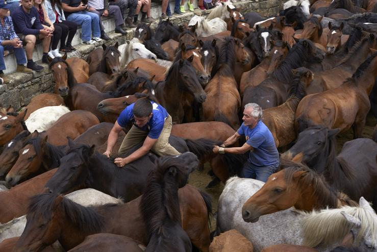 "July 9, 2019 - Sabucedo, Galicia, Spain: ""Aloitadores"" immobilize wild horses with their hands and bodies to cut their manes and deworm them. Since 1567, the first weekend of July is marked by Rapa dás Bestas every year. The tradition begins at the townÕs. Tomas Cale - Arquivo / Europa Press"